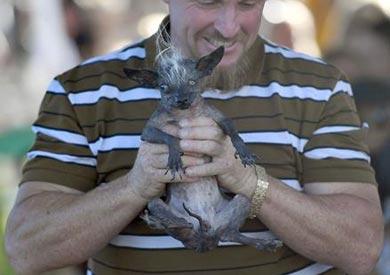 سويبي رامبو - أقبح كلب في العالم