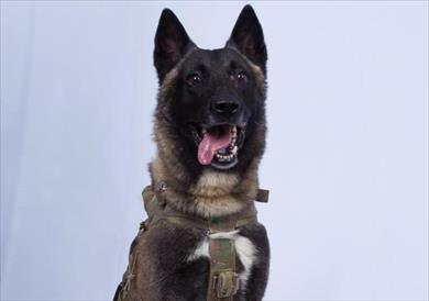 الكلب المشارك بعملية قتل البغدادي