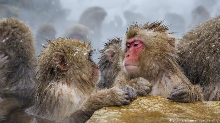 يقول العلماء إن طريقة الاستدعاء الذاتي في التفكير أي تكرار الشيء بطريقة مشابهة ذاتيا تكاد تتشابه في البشر والقرود