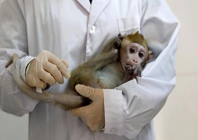 صحيفة صينية: وفاة أول حالة إصابة بشرية في الصين بـ«الفيروس القردي B»