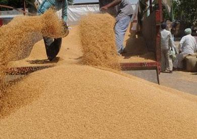 الزراعة تؤكد: لا صحة لاستيراد الحكومة شحنات قمح مسرطنة -          بوابة الشروق