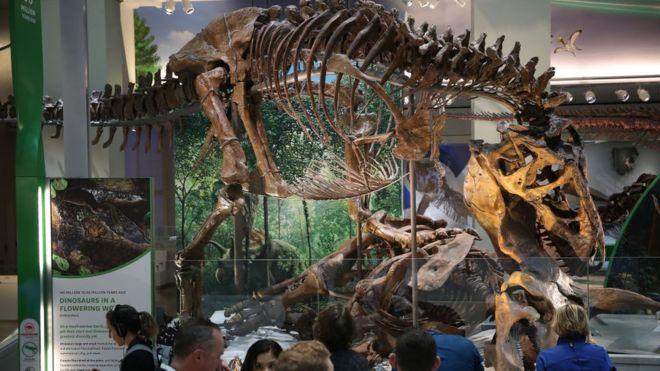 """تيرانوصوراس ريكس هو نجم الحفريات في عالم الديناصورات. وهنا إحدى حفرياته معروضة في """"ذا سميثسونيان"""" في يونيو 2019"""