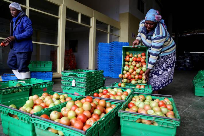 الفاو تطلق مشروع لتحسين إنتاجية الحيازات الصغيرة في الأراضي الجديدة
