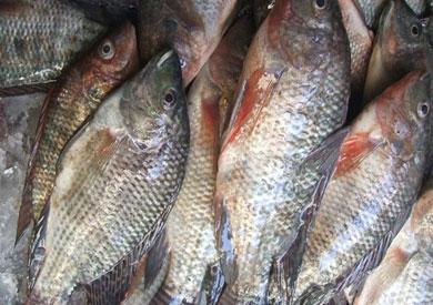 «الزراعة»: جميع الأسماك المصرية صالحة.. ونتعرض لحملة ممنهجة