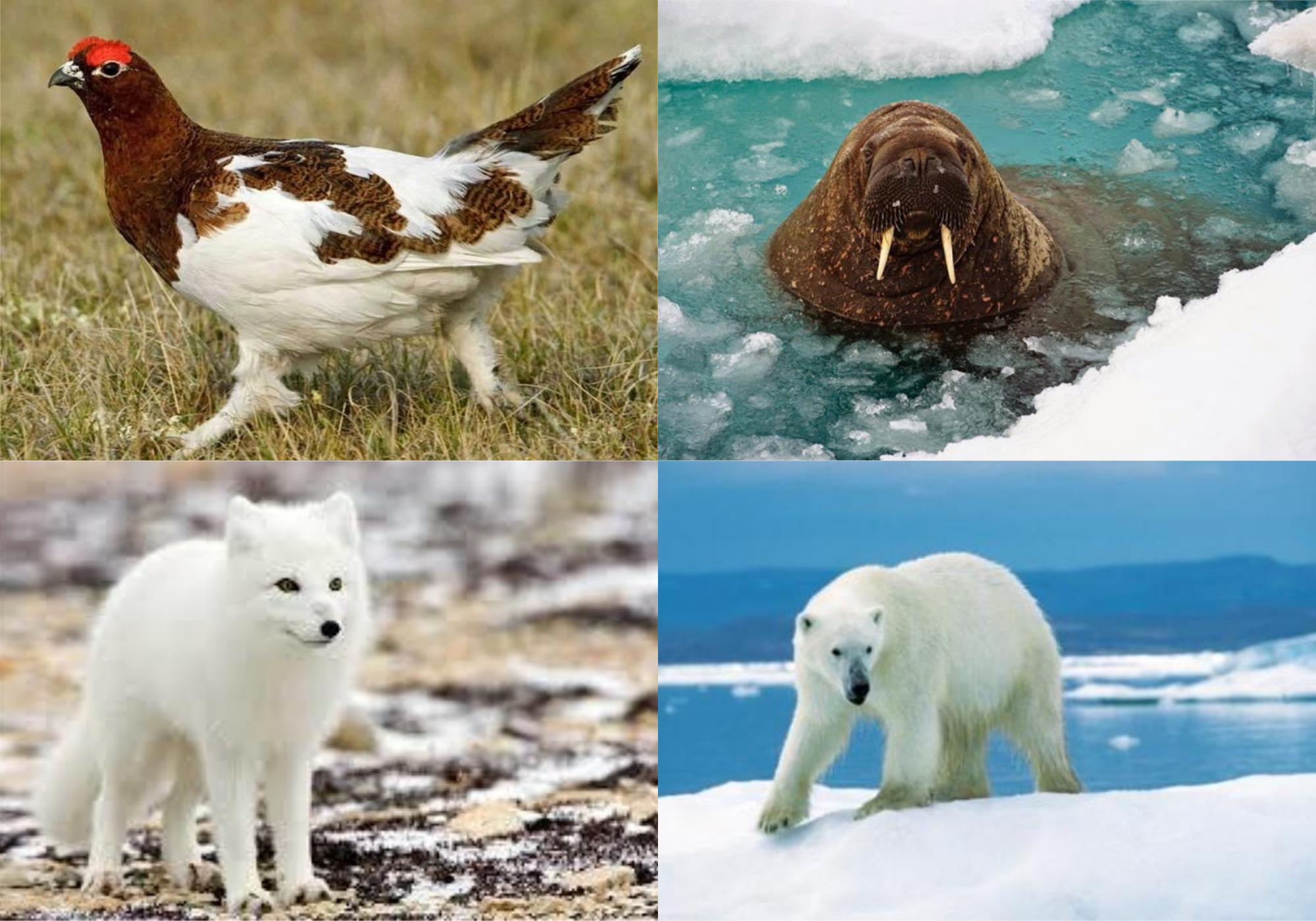 بالصور كيف تأقلمت الكائنات الحية على صقيع الحياة القطبية بوابة الشروق نسخة الموبايل