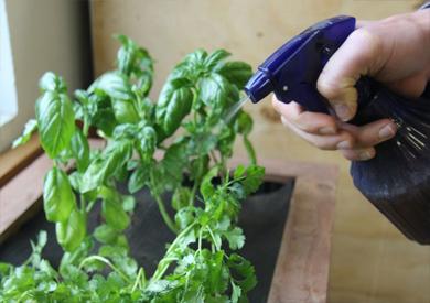 مع ارتفاع درجات الحرارة.. كيف تحافظ على الزراعة المنزلية