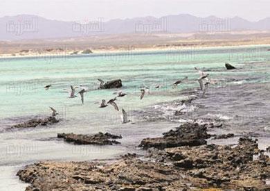 شاطىء قلعان البحر الاحمر تصوير لبنى طارق