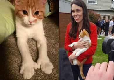 رئيسة وزراء نيوزيلندا جاسيندا أردرن  مع قطتها