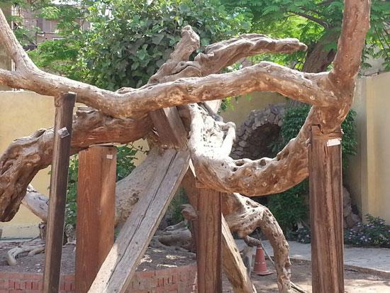 مزار شجرة مريم المقدس