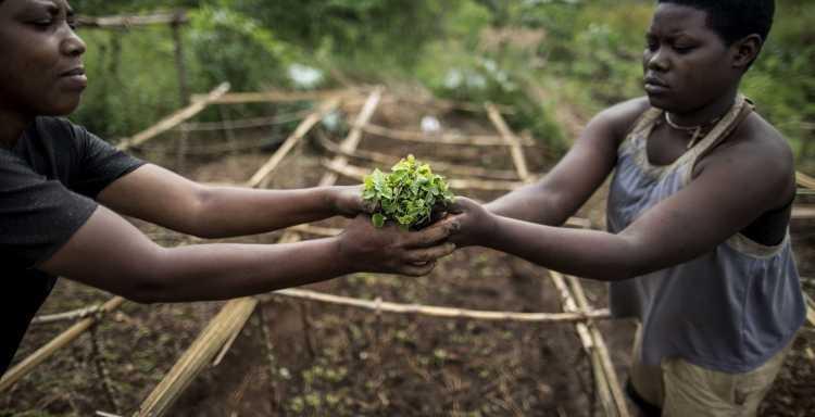 من النيجر إلى زامبيا... المزارع المصرية في إفريقيا -          بوابة الشروق