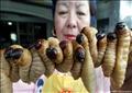 سيدة من تايلاند تعرض وجبة من الحشرات