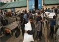 الفلسطينيون أثناء حصولهم على المساعدات الغذائية من الأونروا في مدينة غزة