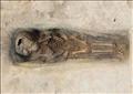 عثر في أحد القبور على بقايا جثمان طفل ولفائف الكتان المستخدمة لتحنيطه