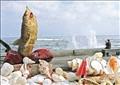 بيع علي الشاطىء تصوير احمد عبد اللطيف