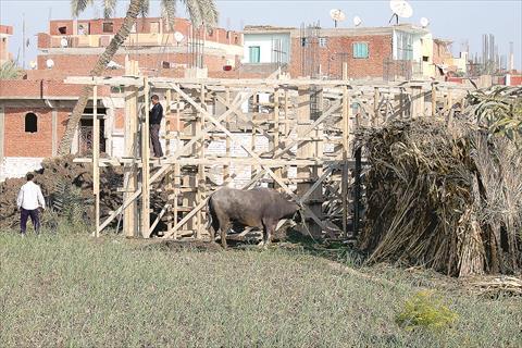 تعديات على الاراضى الزراعية - الفيوم - تصوير جيهان نصر