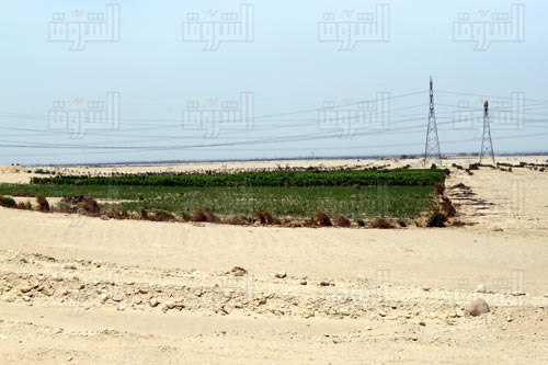 الأمين العام للجمعية السعودية المصرية:نسعى إلى استصلاح 50 ألف فدان خلال عامين