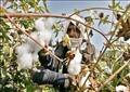 عزوف المزارعين عن زراعة القطن واتجاه مصانع الغزل للأقطان المستوردة وتوقف بعض المصانع وراء تراجع حجم الصادرات – صورة أرشيفية
