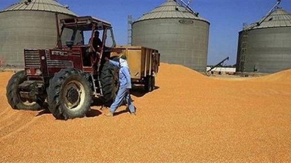 فساد القمح