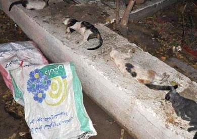 القطط تم إخراجها حية.. والصور المتداولة مفبركة