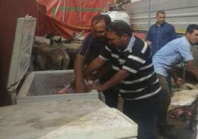 ضبط 11 حمار قبل بيعهم للمواطنين بشرق مدينة نصر