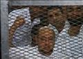 جانب من محاكمة المتهمين في قضية «مذبحة كرداسة» – صورة أرشيفية
