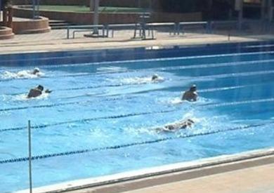 السباحة بواقعة استاد القاهرة