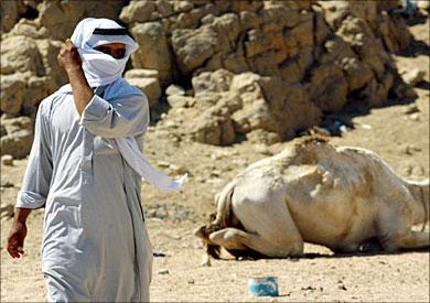 بدو سيناء يستغيثون بالسيسى بعد منع سير سيارات الدفع الرباعى