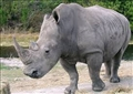 باحثون: عينات الحمض النووي لحيوان وحيد القرن يمكن أن تساهم في إثبات إدانة صياديه