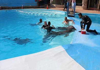 محافظ جنوب سيناء يشهد تجربة علاج طفل صربي من التوحد عن طريق موجات الألتراسونيك الصادرة من الدولفين