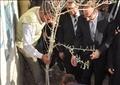 زراعة 3 ملايين شجرة زيتون في بني سويف