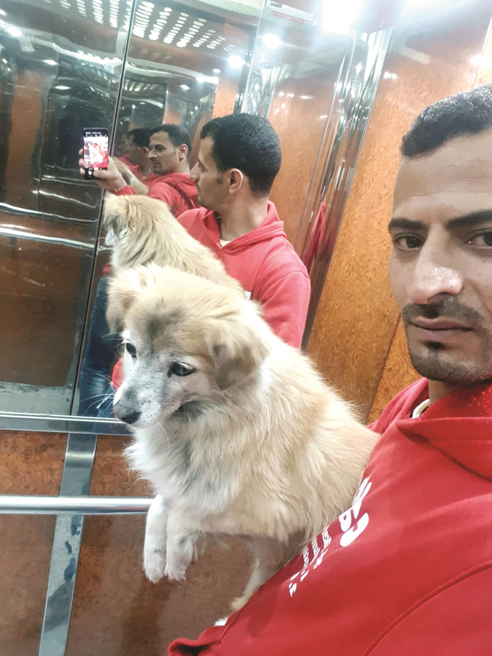 الكلب الكويتى المتغيب دحدوح