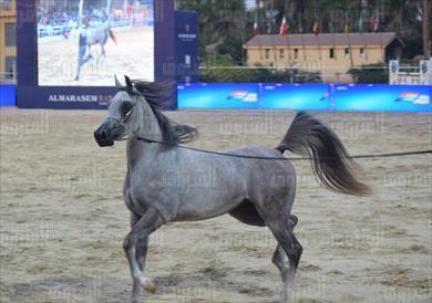 الخيول المصرية - تصوير: داليا مصطفى