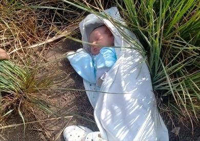 العثور على طفلة رضيعة في أرض زراعية بالدقهلية