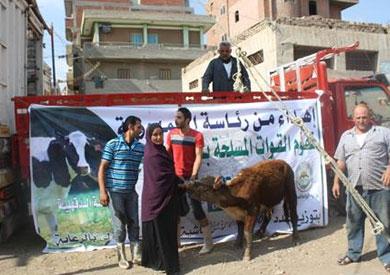 توزيع الماشية بالدقهلية بمناسبة أفتتاح قناة السويس من قبل جمعية الأورمان