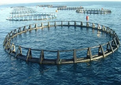 الأقفاص السمكية
