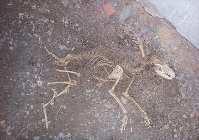 صور هيكل عظمى يشبة الديناصور