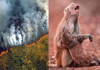 القردة التي ظهرت تبكي طفلها الميت