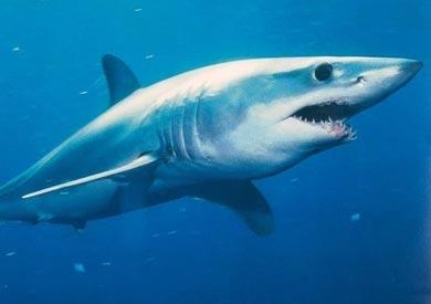 القرش - ارشيفية