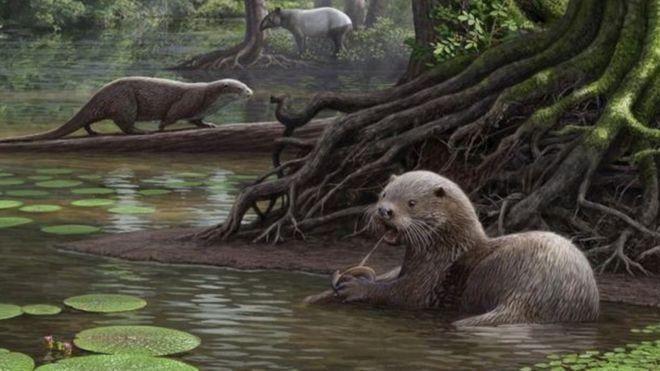 ثعلب الماء المنقرض كان يزن 50 كيلوغراما يومكنه سحق عظام الطيور بفكه القوي