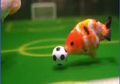 أسماك تلعب الكرة