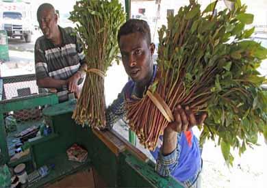 نبات القات فى أثيوبيا