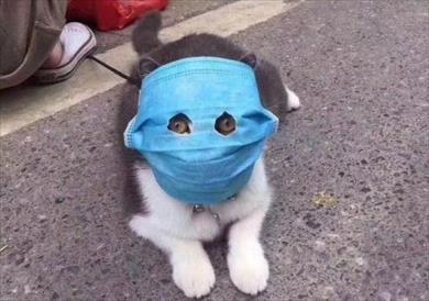 قطة ترتدي «الكمامة» خوفا من فيروس كورونا
