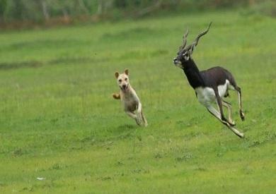 أستراليا الحيوانات المفترسة تمثل خطرا على الحياة البرية بعد حرائق الغابات بوابة الشروق نسخة الموبايل